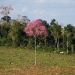 Apostamos-al-futuro-y-a-la-biodiversidad