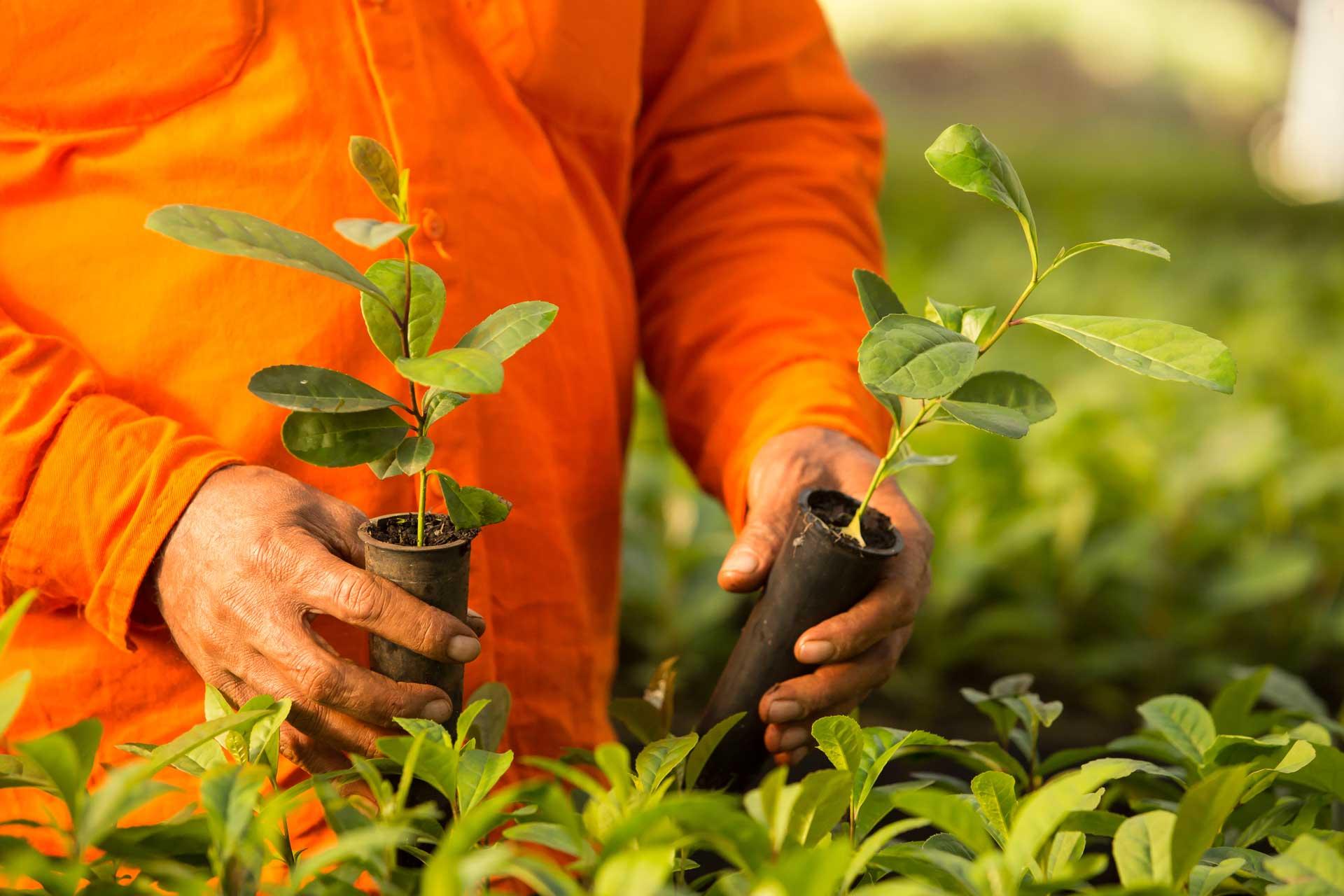 Plantines-cuidadosamente-seleccionados